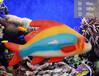 仿真雕塑海洋馆雕塑海洋鱼类雕塑景区公园海洋馆树脂蔡海摆件