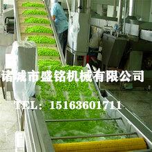 四川成都保鲜花椒速冻流水线花椒全套加工机器图片