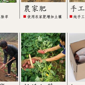苏州石路周边蔬菜配送,调味品干货批发零售送货上门。