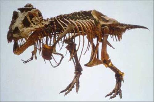 爬行动物化石在哪私下洽谈安全放心