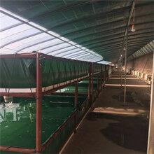 养殖环保虾类鱼苗水池供应绿色帆布水池定做水产业帆布鱼池储水池图片