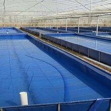 养殖牛蛙储水池江苏小龙虾帆布养殖池茂名对白虾鱼池储水池图片