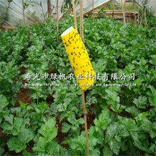 供应双面黄色粘虫板诱虫板黄板篮板果蔬花卉大棚均可用图片