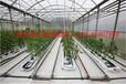 园艺花卉采暖设备厂家供应空气源热泵空气能热泵采暖设备