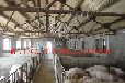 猪舍猪棚取暖设备空气源热泵厂家
