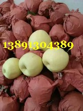 陕西酥梨价格,陕西大荔砀山酥梨产地价格