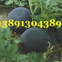 陕西大棚黑无籽西瓜产地上市价格图片
