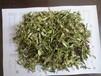 沙棘葉價格寧夏野生沙棘葉批發沙棘葉芽茶沙棘葉提取物
