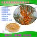 沙棘提取物沙棘黃酮價格寧夏沙棘果粉批發沙棘濃縮汁鮮汁原漿