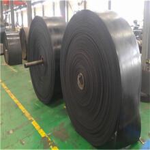青岛聚酯胶带厂家-青岛输送带生产厂家尼龙输送带厂家图片