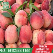 早熟桃树苗价格早熟春雪桃树苗果大离核早熟永莲蜜桃树苗价格