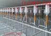 豬場設備自動化喂料系統
