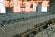 母猪保胎定位栏厂家直销定位栏一组十个猪位厂家直销