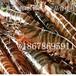 供应斑节虾基围虾日本车虾竹节虾价格批发