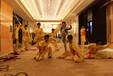 3D狮子互动视频秀演出