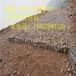 吉林白山铅丝笼网片厂家现货供应8号线护坡用铅丝笼