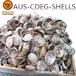 C级石决明澳洲鲍鱼壳50kg/件AUS-ABA-CDEG