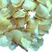金黄色珍珠贝壳天然贝壳批发