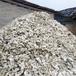 毛蚶壳洗水瓦楞子海洋贝壳风铃原材料