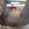 铜川新型山猪捕猎机拉铁丝野猪捕猎机