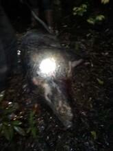 汉中电猫捕野猪机器汉中捕猎机图片