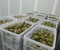 水果保鲜库水果冷库安装水果保鲜库安装水果保鲜库价格