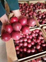 百香果籽可以吃吗广西梧州网狼农特百香果怎么吃可以减肥图片