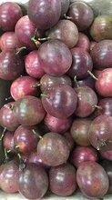 常年批发广西百香果和越南的百香果一级大果百香果价格图片