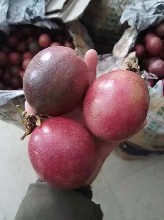 百香果今年批發價格紫香一號百香果批發圖片