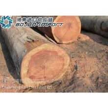 进口印尼巴基斯坦阿位伯金合欢木商检查货通关代理