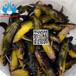 技术指导黄颡鱼鱼种养殖场_创新水产