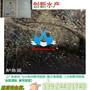 广东水产鱼苗,广东鲈鱼苗,广东鲈鱼水花苗出售AA级约3g身长约1-8cm鲜活鱼苗图片