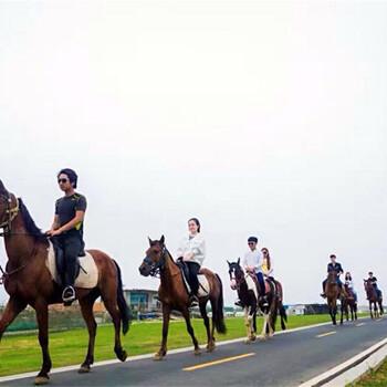 上海租马匹马术演出小马驹展览展示活动租马车哪里租马匹上海马术活动