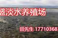 渔场出售各种鱼苗,观赏鱼锦鲤,成品鱼,放生鱼