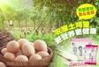 炒鸡蛋也是有技术的-----粉嫩公主酒酿蛋dac668