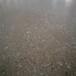 柳州厂房地面翻新--河池水泥地硬化--来宾混凝土抛光