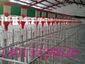 自动化猪场设备和设施福宇畜牧图片