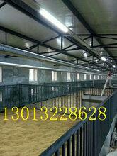 河北自动喂猪料线设备全自动养猪设备猪场料线设备