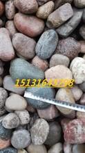 山东永顺盆景填充1-3cm鹅卵石鹅卵石滤料无毒无味图片