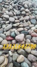 山西大型天然鹅卵石厂家永顺砾石多少钱一吨图片