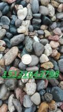 邢台厂家直销0.5-2厘米鹅卵石垫层滤料图片