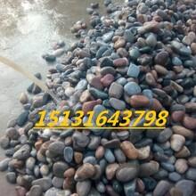 邯郸3-5树坑用鹅卵石铺路用2-3厘米砾石河卵石驳岸作用图片