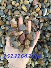 廊坊道路施工用鹅卵石砾石滤料直销价格河卵石最便宜供应图片