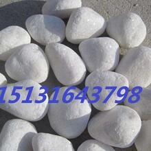 承德3-5白色砾石永顺机制白色卵石应用白色鹅卵石供应厂家图片