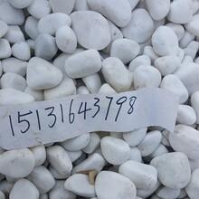 白色洗米石3-5毫米白色砾石3-5厘米白色洗米石5-8毫米图片