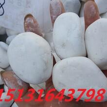 永顺白色石米,水磨石,机制石米,白色砾石图片