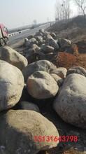 山东1米以上驳岸石厂家永顺50-80厘米大砾石大鹅卵石园林作用图片