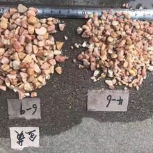 聊城黄色水洗石批发米黄洗米石报价金黄石米生产厂家图片