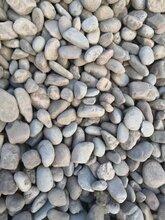 河北鹅卵石铺路变压器鹅卵石供应商图片