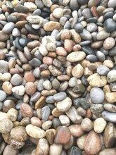 河北鹅卵石滤料园林用鹅卵石厂家直销图片